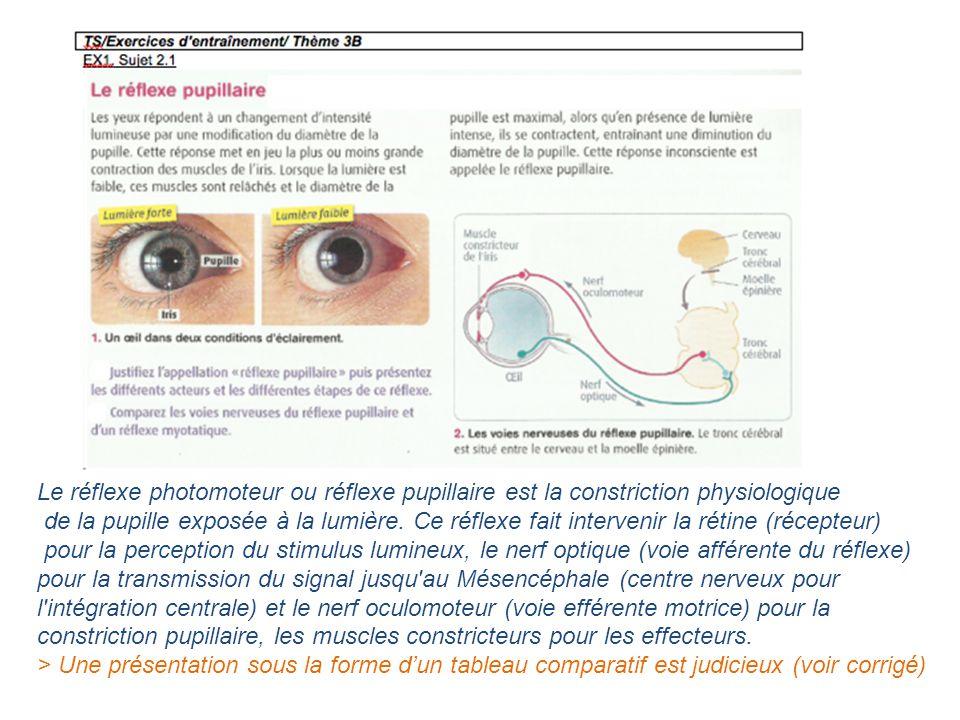 Le réflexe photomoteur ou réflexe pupillaire est la constriction physiologique