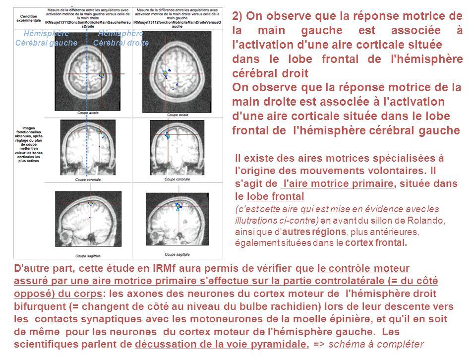 dans le lobe frontal de l hémisphère cérébral droit