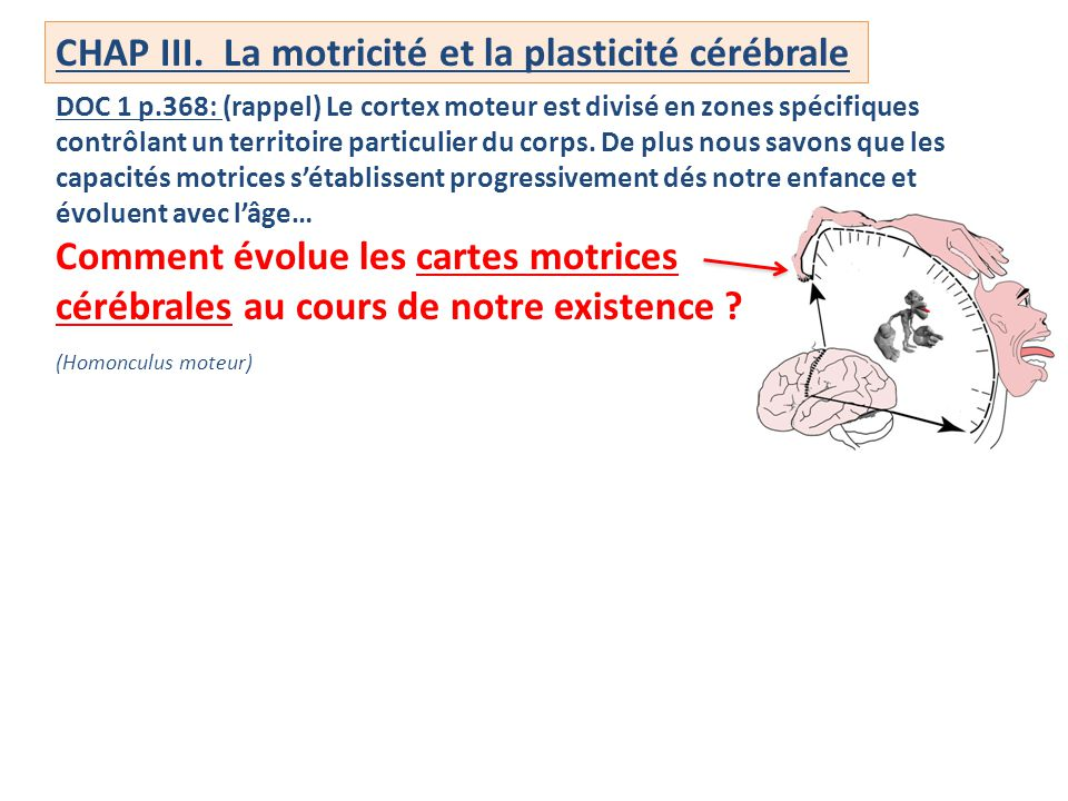 CHAP III. La motricité et la plasticité cérébrale