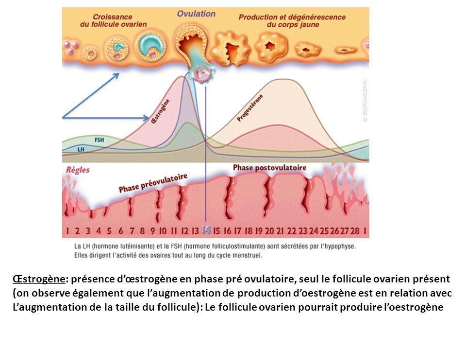 Œstrogène: présence d'œstrogène en phase pré ovulatoire, seul le follicule ovarien présent