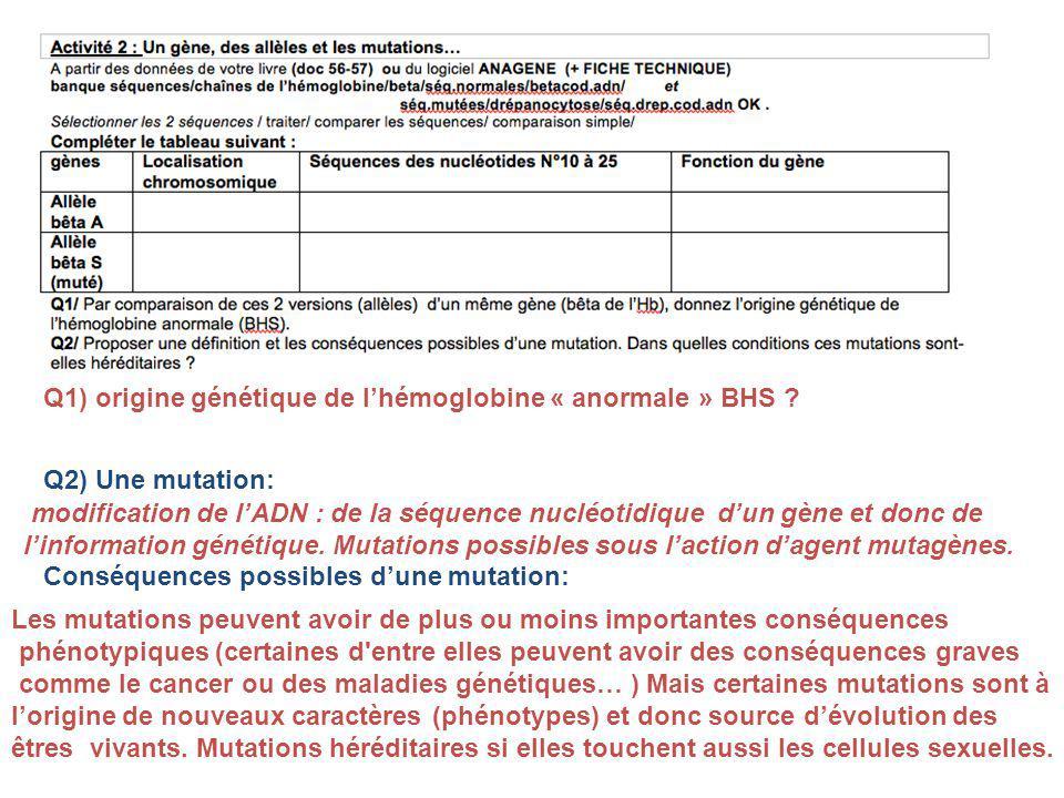 Q1) origine génétique de l'hémoglobine « anormale » BHS