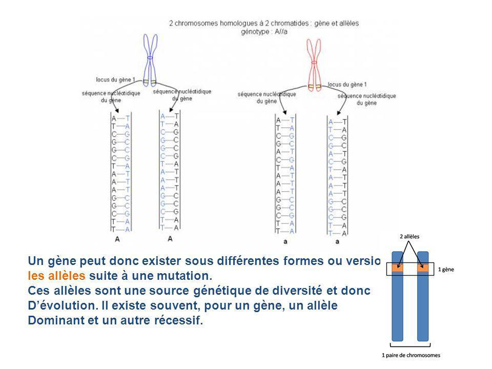Un gène peut donc exister sous différentes formes ou versions :