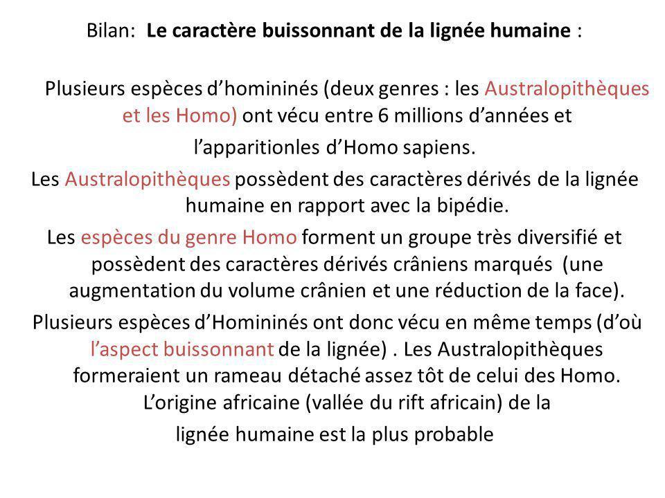 Bilan: Le caractère buissonnant de la lignée humaine :