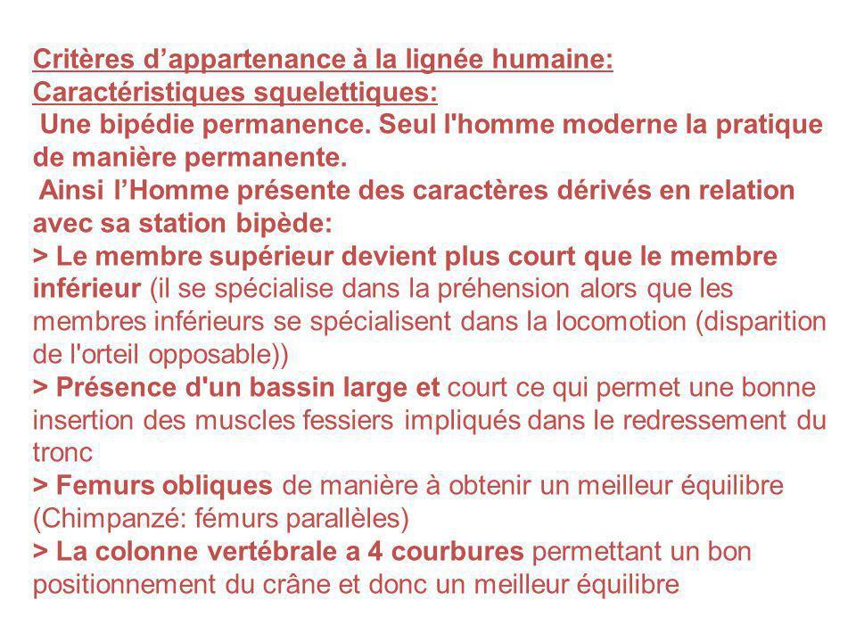 Critères d'appartenance à la lignée humaine: