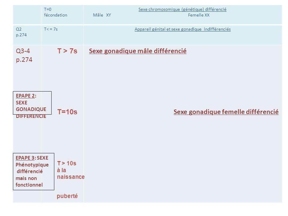 Sexe gonadique mâle différencié