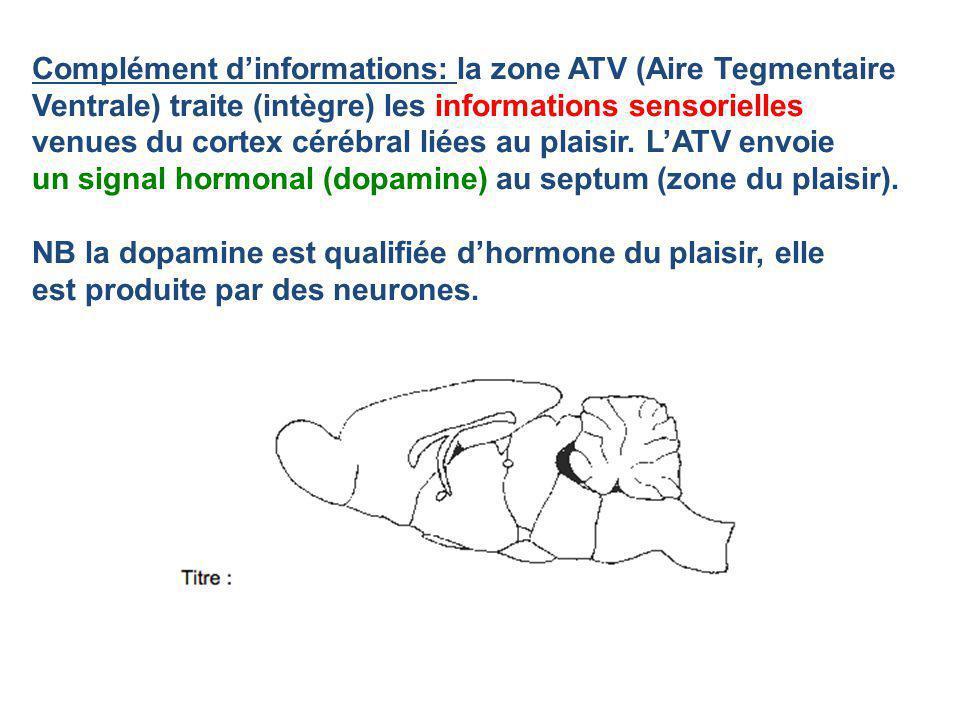 Complément d'informations: la zone ATV (Aire Tegmentaire