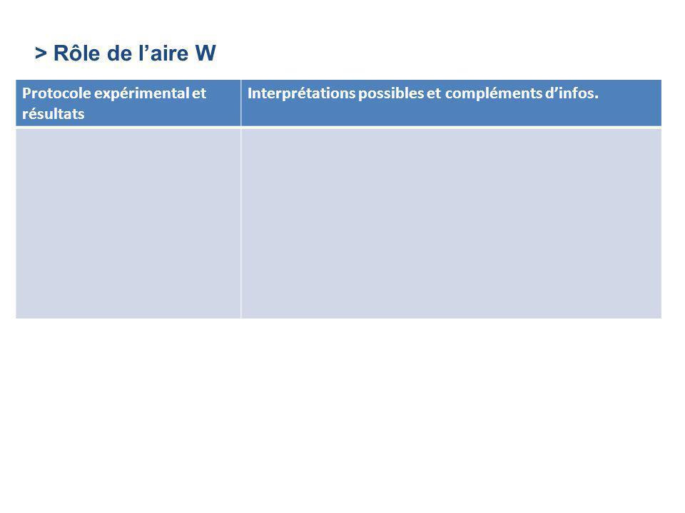 > Rôle de l'aire W Protocole expérimental et résultats