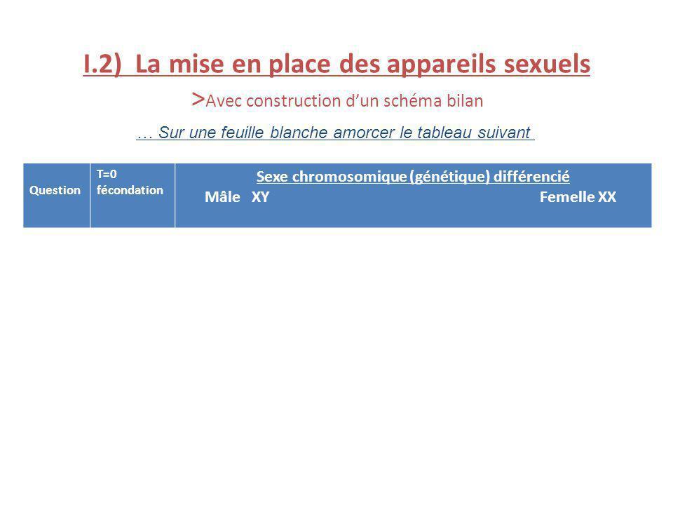 I.2) La mise en place des appareils sexuels