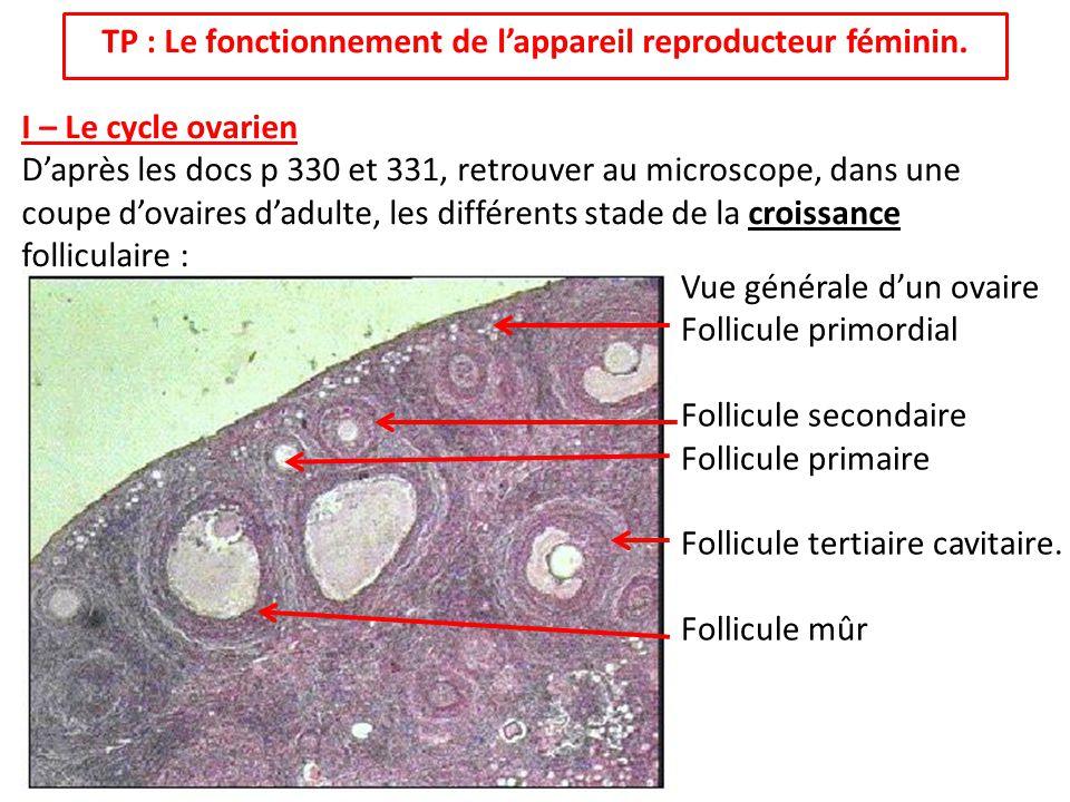 TP : Le fonctionnement de l'appareil reproducteur féminin.