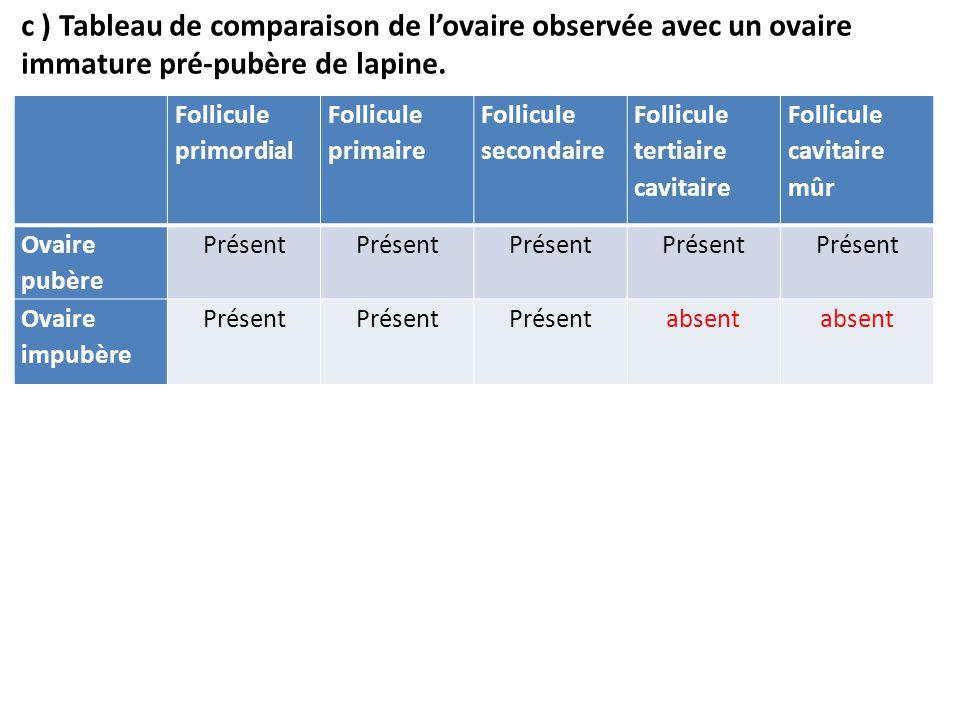 c ) Tableau de comparaison de l'ovaire observée avec un ovaire immature pré-pubère de lapine.