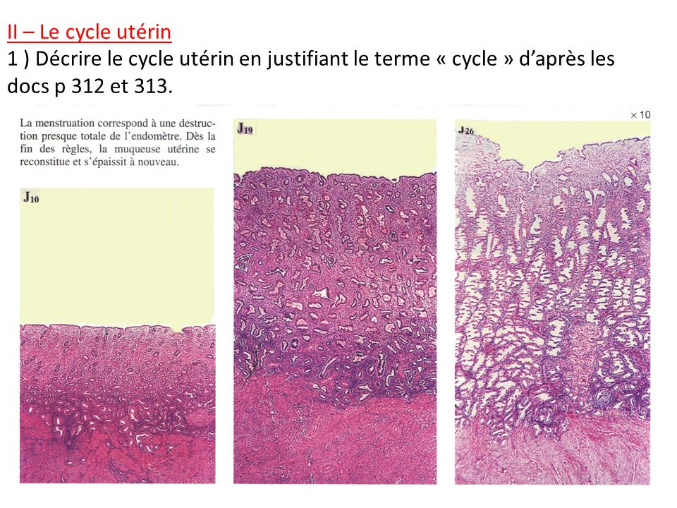 II – Le cycle utérin 1 ) Décrire le cycle utérin en justifiant le terme « cycle » d'après les docs p 312 et 313.