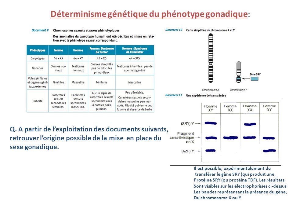 Déterminisme génétique du phénotype gonadique: