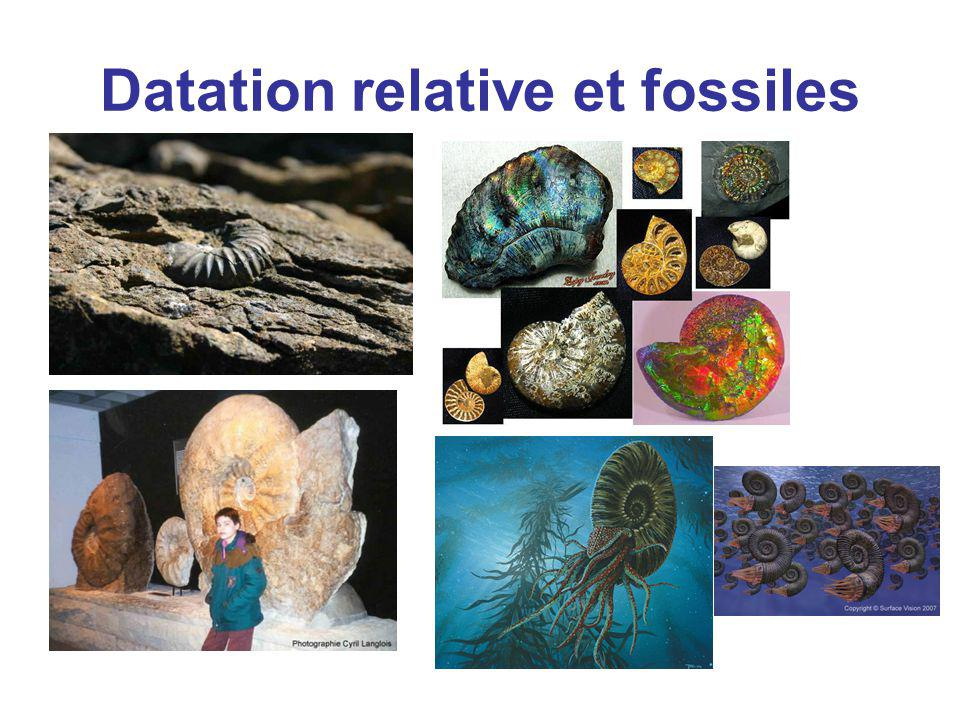 Datation relative et fossiles