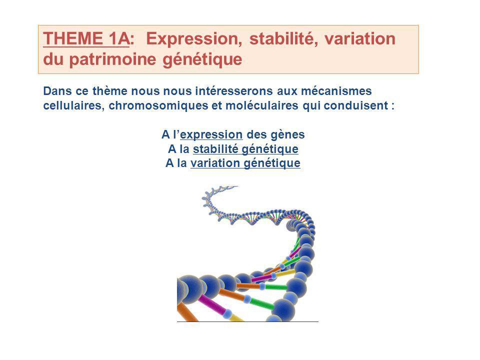 THEME 1A: Expression, stabilité, variation du patrimoine génétique
