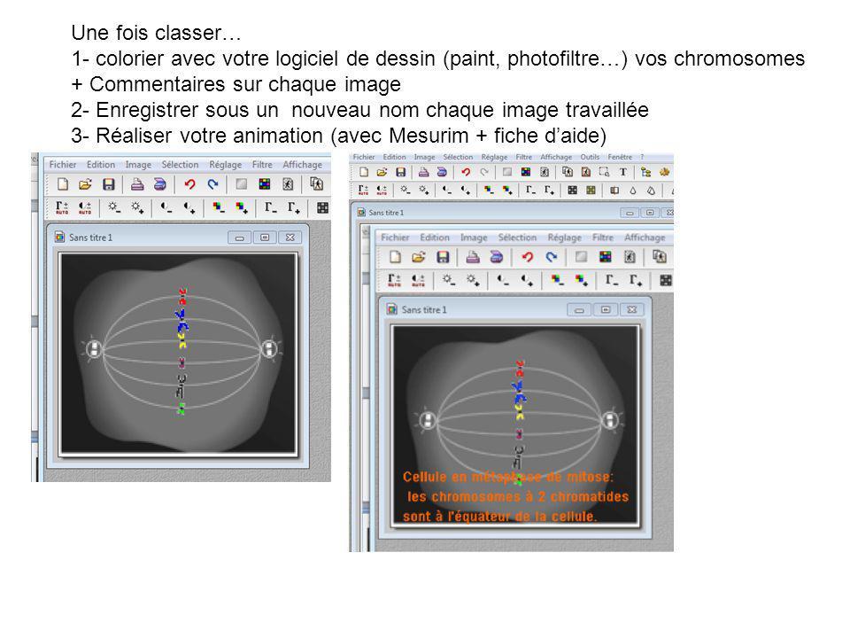Une fois classer… 1- colorier avec votre logiciel de dessin (paint, photofiltre…) vos chromosomes + Commentaires sur chaque image.