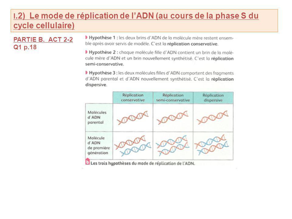 I.2) Le mode de réplication de l'ADN (au cours de la phase S du cycle cellulaire)