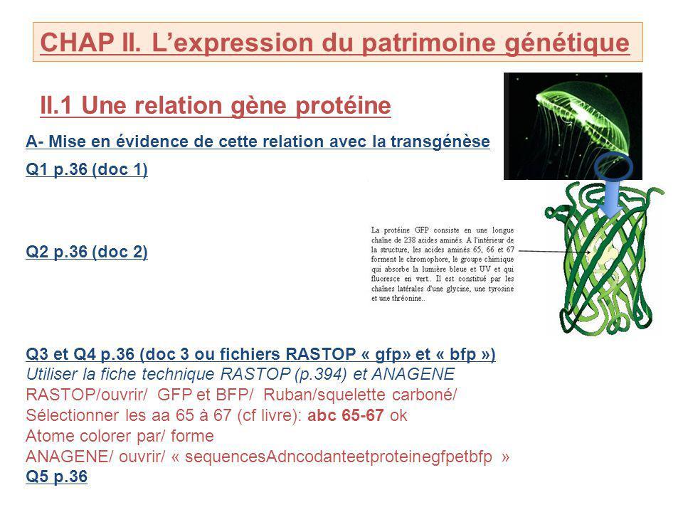 CHAP II. L'expression du patrimoine génétique