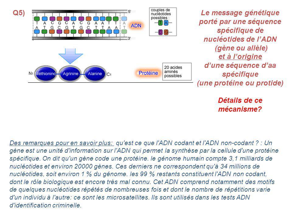 spécifique de nucléotides de l'ADN (gène ou allèle) et à l'origine