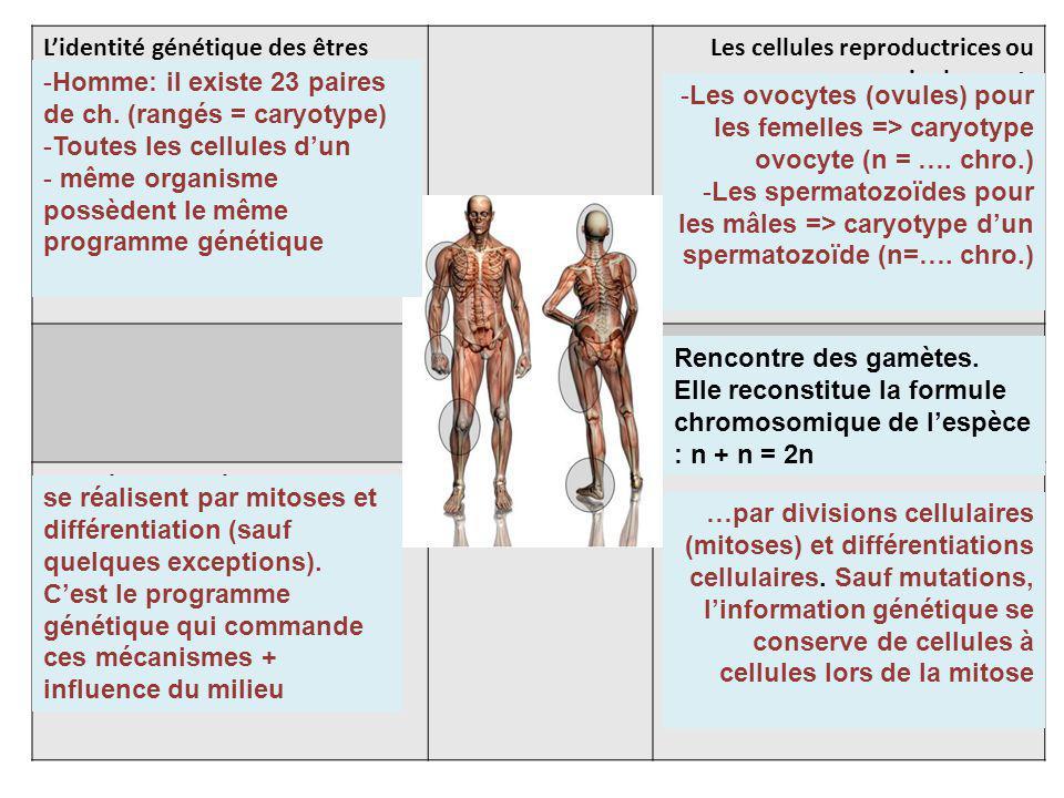 L'identité génétique des êtres vivants est portée dans les cellules par les chromosomes