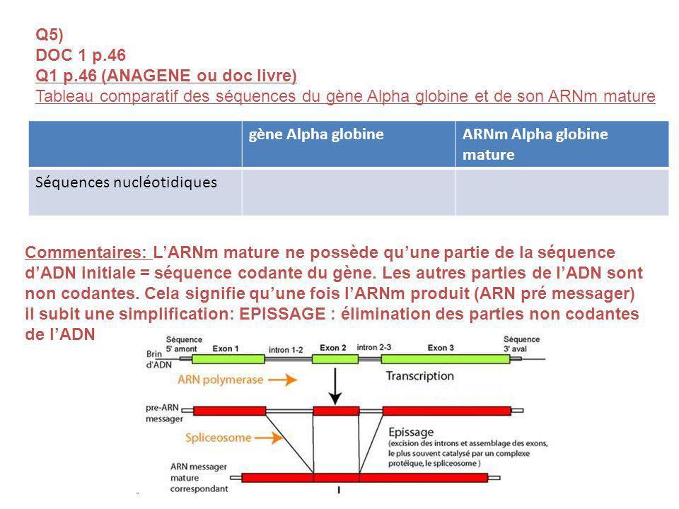 Q5) DOC 1 p.46. Q1 p.46 (ANAGENE ou doc livre) Tableau comparatif des séquences du gène Alpha globine et de son ARNm mature.
