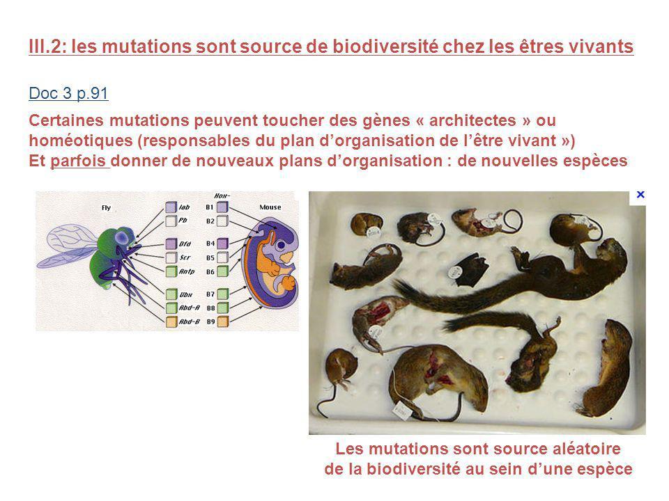 III.2: les mutations sont source de biodiversité chez les êtres vivants