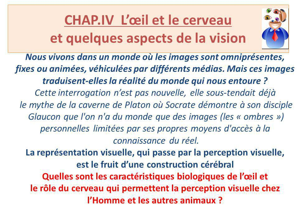 CHAP.IV L'œil et le cerveau et quelques aspects de la vision