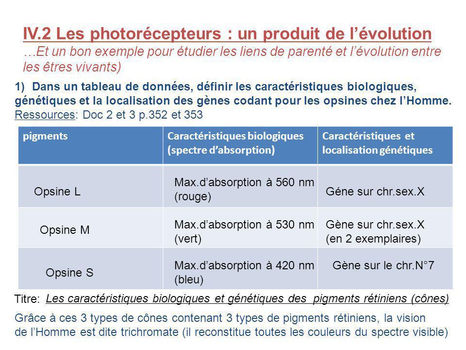 IV.2 Les photorécepteurs : un produit de l'évolution