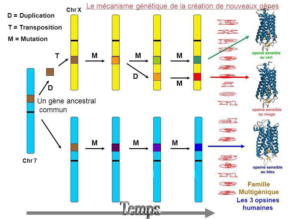 Expression des gènes Temps