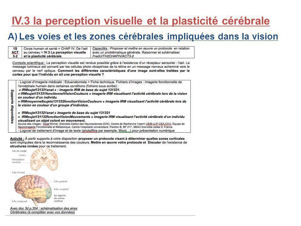 IV.3 la perception visuelle et la plasticité cérébrale