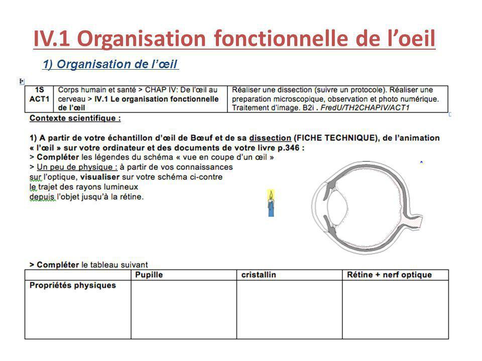 IV.1 Organisation fonctionnelle de l'oeil