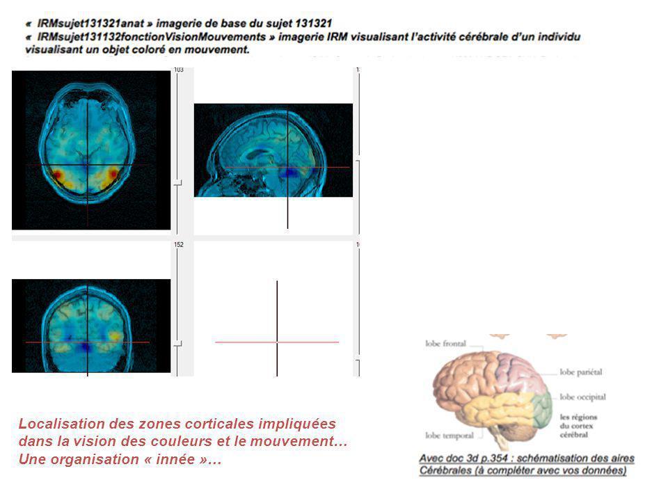Localisation des zones corticales impliquées