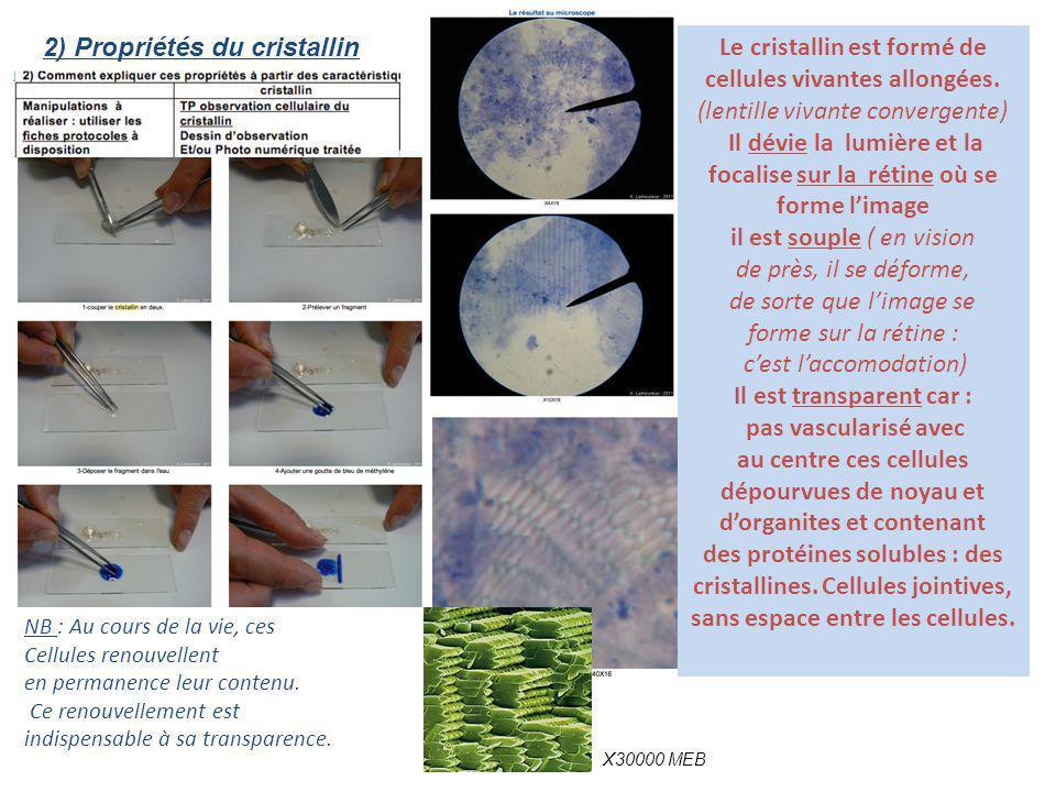 2) Propriétés du cristallin Le cristallin est formé de