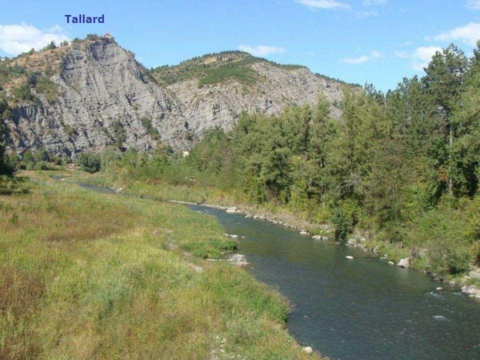 Tallard