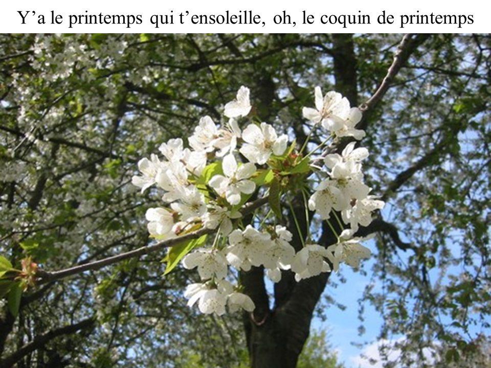 Y'a le printemps qui t'ensoleille, oh, le coquin de printemps