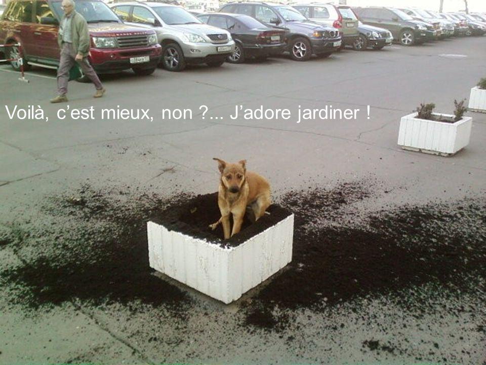 Voilà, c'est mieux, non ... J'adore jardiner !