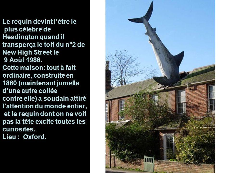 Le requin devint l'être le plus célèbre de Headington quand il transperça le toit du n°2 de New High Street le 9 Août 1986.
