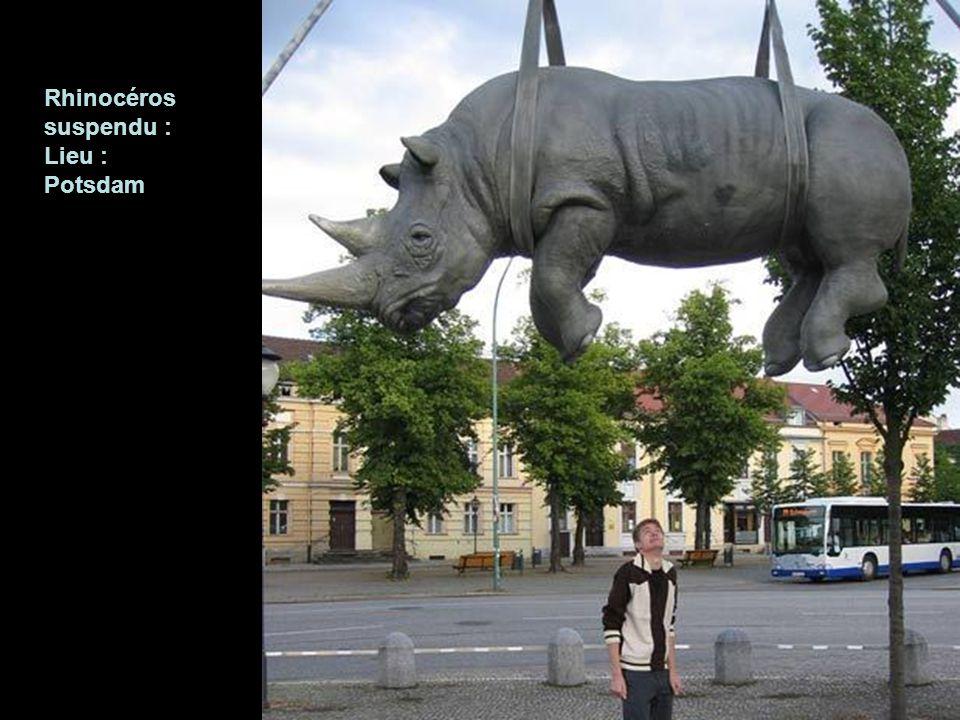 Rhinocéros suspendu : Lieu : Potsdam