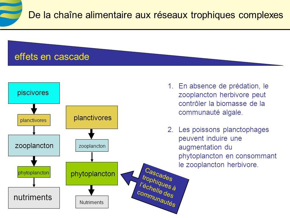 De la chaîne alimentaire aux réseaux trophiques complexes