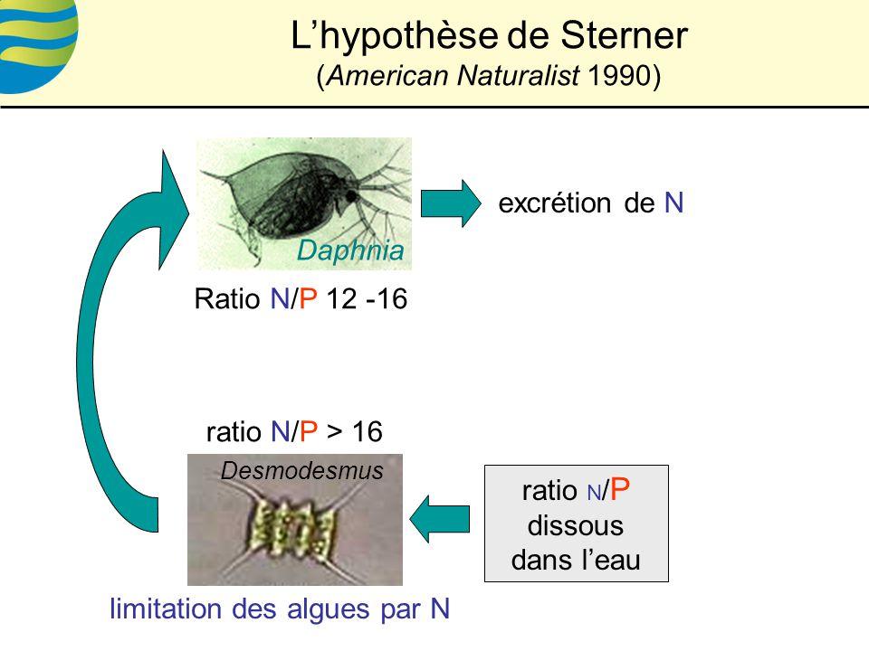 L'hypothèse de Sterner