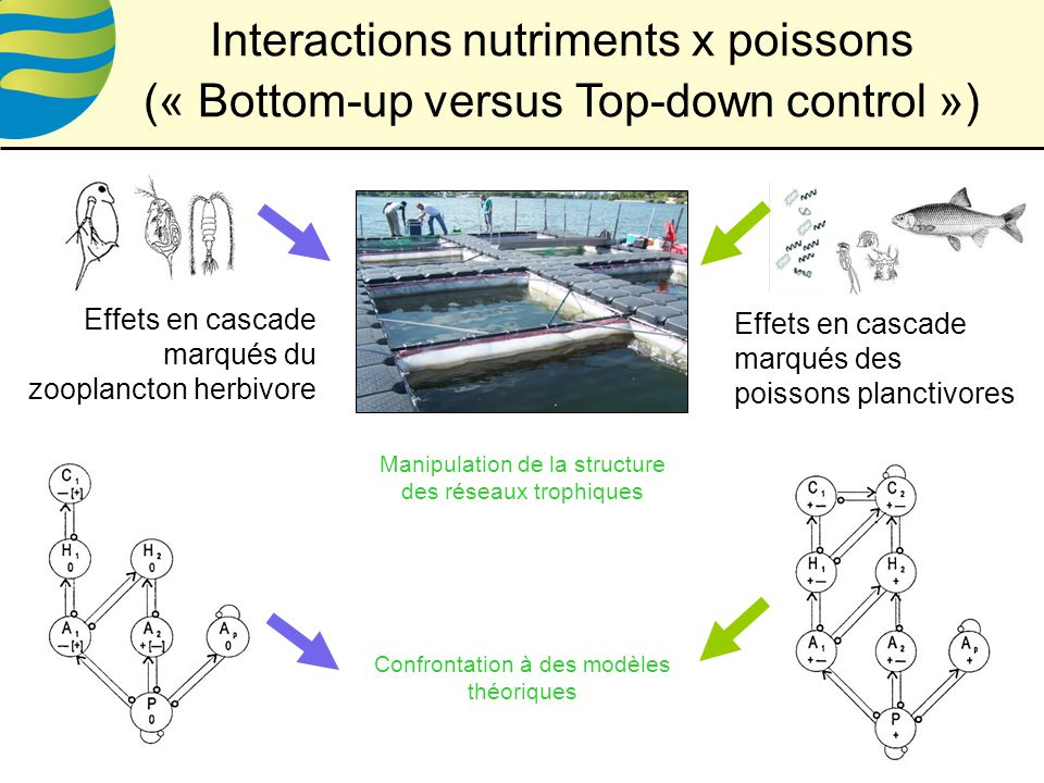 Interactions nutriments x poissons