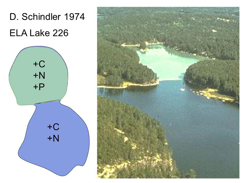 D. Schindler 1974 ELA Lake 226 +C +N +P +C +N 9