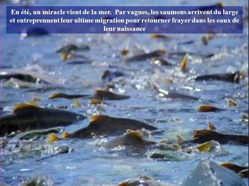 En été, un miracle vient de la mer