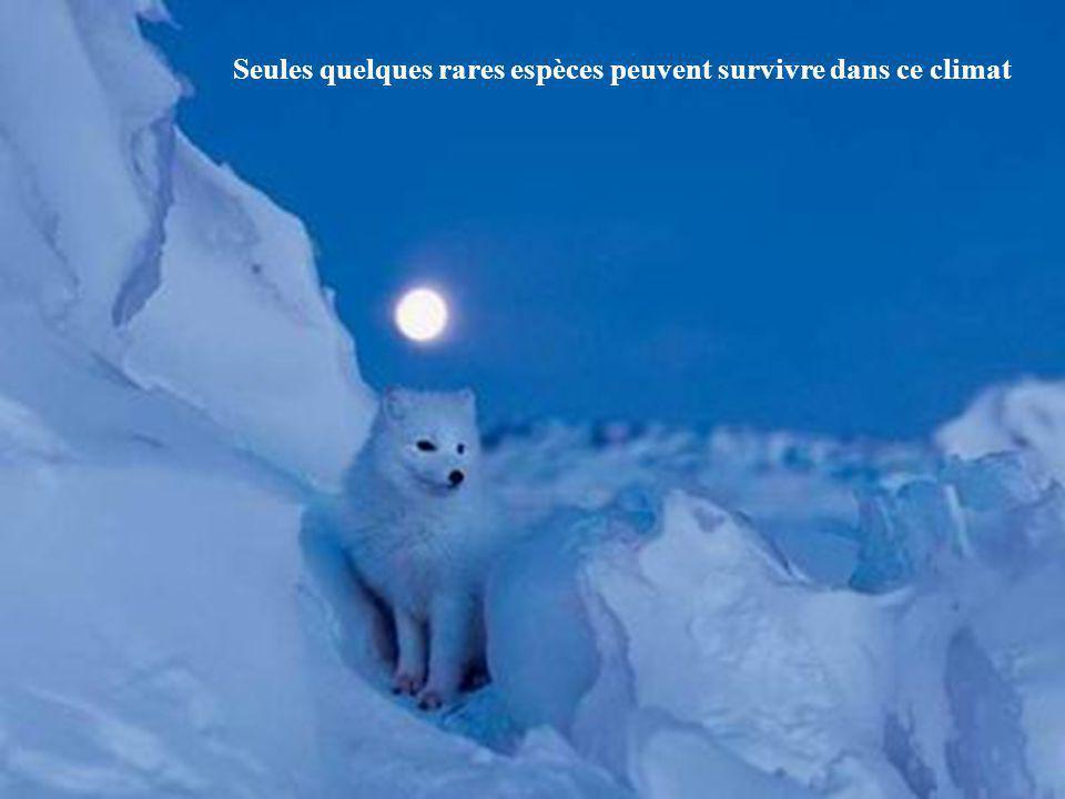 Seules quelques rares espèces peuvent survivre dans ce climat
