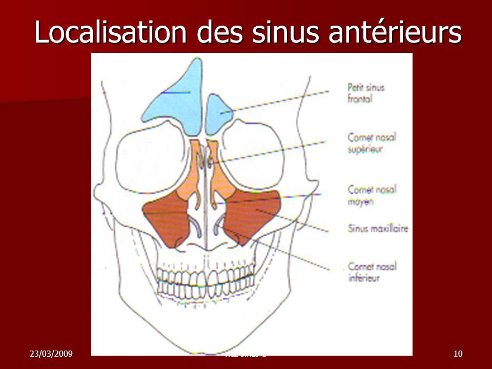 Localisation des sinus antérieurs