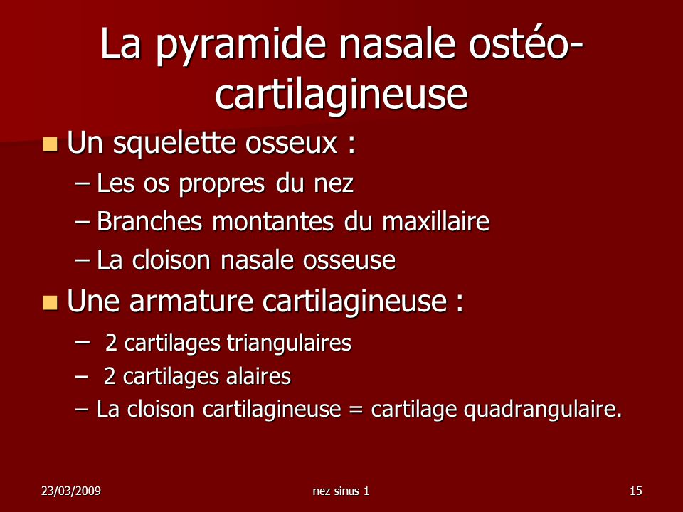 La pyramide nasale ostéo-cartilagineuse