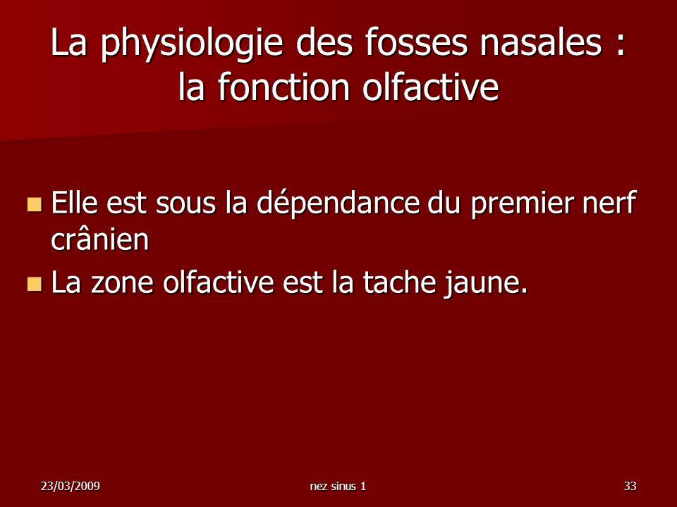 La physiologie des fosses nasales : la fonction olfactive