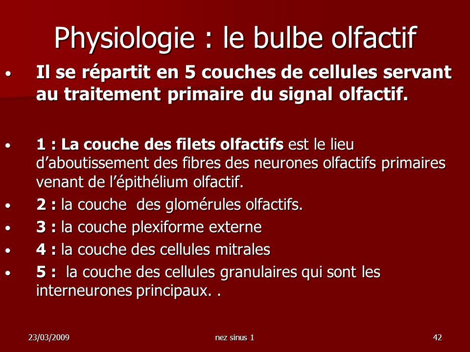 Physiologie : le bulbe olfactif