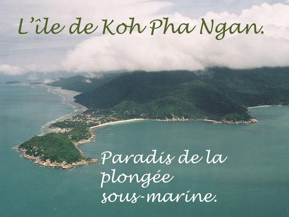 L'île de Koh Pha Ngan. Paradis de la plongée sous-marine.