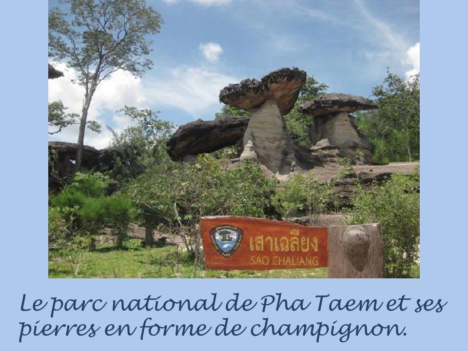 Le parc national de Pha Taem et ses pierres en forme de champignon.