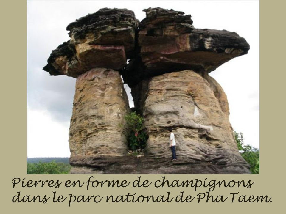 Pierres en forme de champignons dans le parc national de Pha Taem.